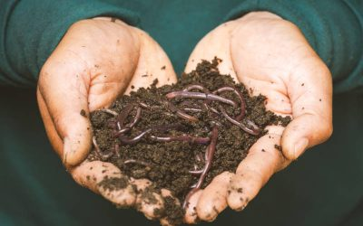 What Are The Benefits Of The Chicken Coop Compost Method?