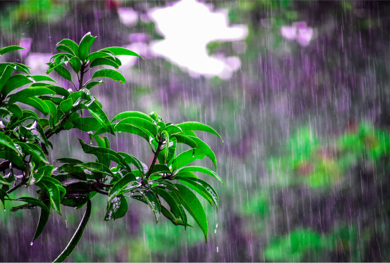 save water in your garden by planting trees