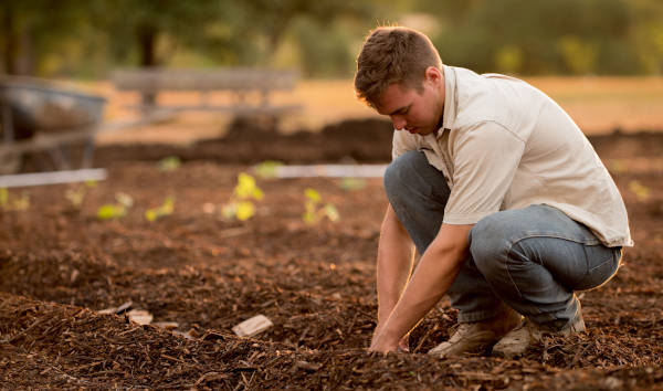 using yard waste in compost